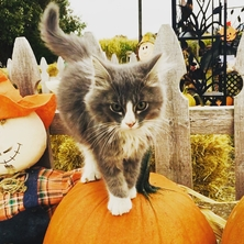 Swore Farms, Cat Lover, PAWS, Pocatello Corn Maze